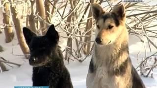 Новосибирские ученые разработали противораковую вакцину для животных