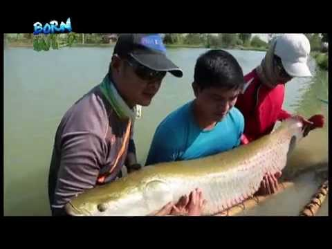 Doc Nielsen Donato encounters Thailand's giant fish | Born to be Wild