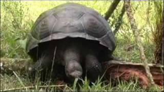 Among the wild tortoises of Galapagos- Lindblad Expeditions