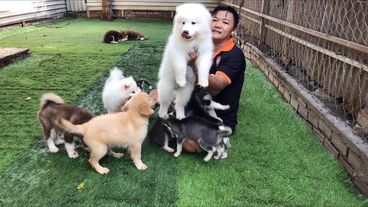 Đàn Cún siêu cưng của Nguyễn Thành!