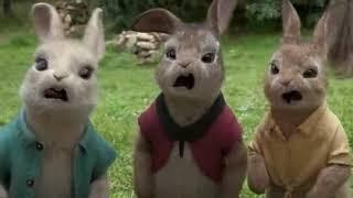 פיטר הארנב (2012) Petter Rabbit