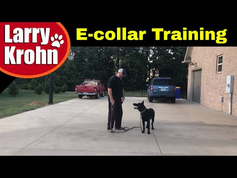 First E Collar / Remote Collar Session with young German Shepherd