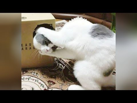 You will LAUGH SO HARD like never before! // Funny CAT VIDEOS compilation