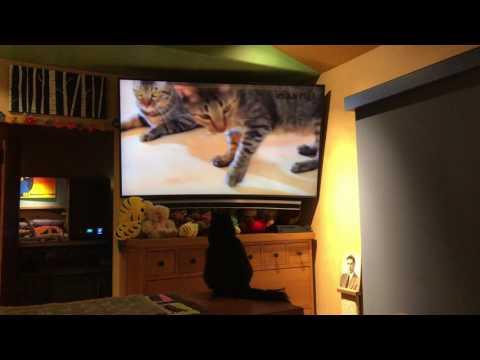 Jupiter Jones watching Cat TV 2