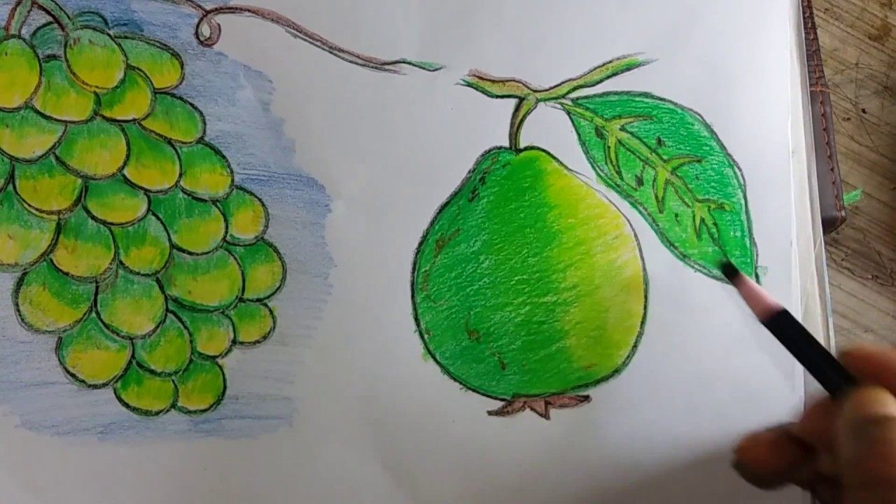 green fruits of Bangladesh/how to draw guava and coloring with oil ...