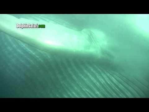 מפגש עם לוויתן מקרוב