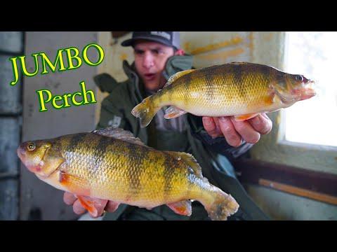 Early Ice JUMBO Perch Tips (Devils Lake)