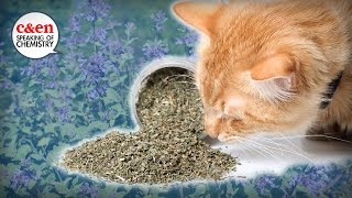 What is catnip, really? — Speaking of Chemistry