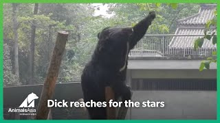 Rescued bear reaches for the stars - but gets so much more