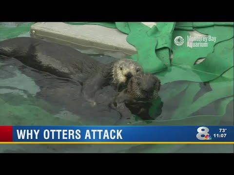 Revenge by Otter
