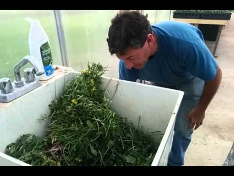 "Solar CITIES ""Weed to Feed""_Program..."