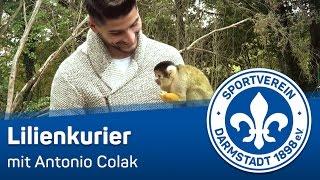 Darmstadt 98 | Lilienkurier-Teaser mit Antonio Colak