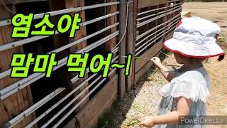 부산 주말농장 이야기-웰빙주말농장-염소야 안녕