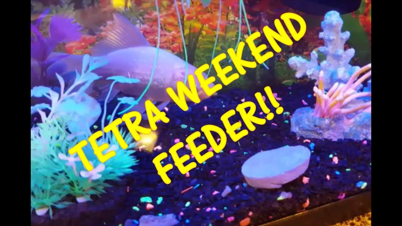 Tetra weekend 5 day aquarium fish feeder youtube for Weekend fish feeder
