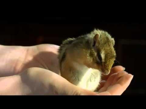 Video quay chậm cảnh con sóc chuột  làm đẹp