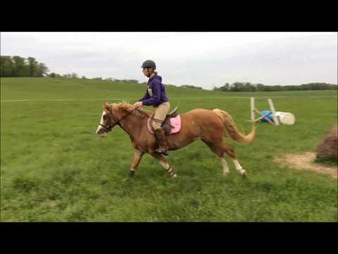 Nugget - Jump Schooling Early May