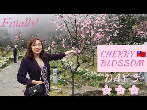 Taiwan Vlog Part 6 | Cherry Blossom in Taiwan! Yangmingshan Natl Park + Pasalubong Hunt in Carrefour
