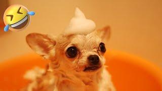 TOP 10 FUNNIEST DOG Videos #1  | Dog Lovers | Funny Pet Videos | SHORT & FUNNY Videos