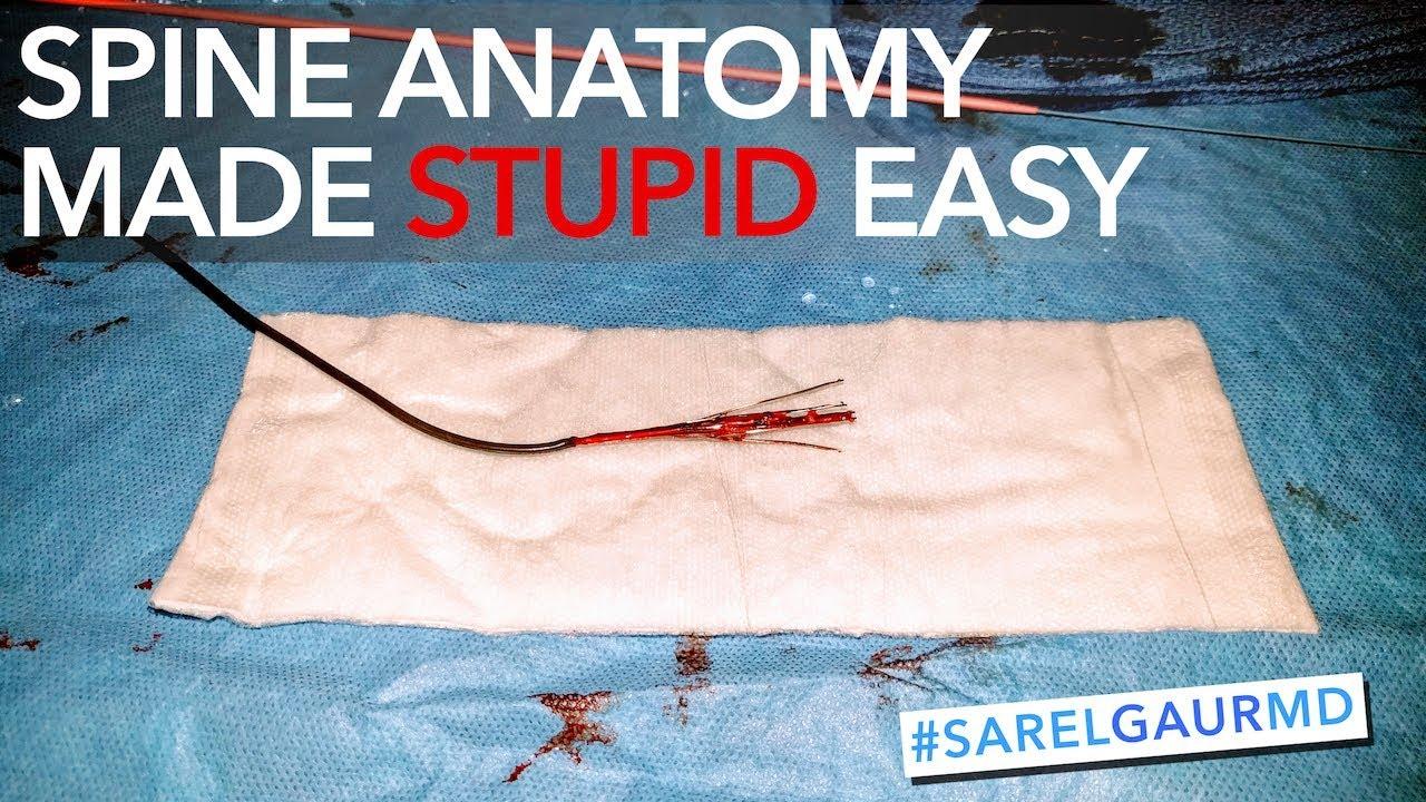 Spine Anatomy Made Stupid Easy - YouTube
