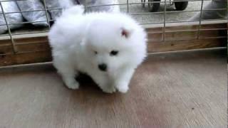 撮影日2012年2月10日アライ畜犬牧場 www.araichikuken.com.