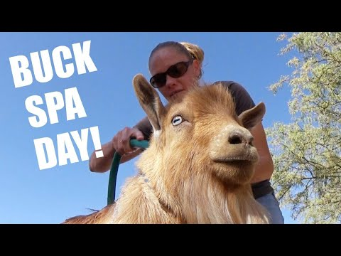 BUCK SPA DAY 2 (MERLE & EVEREST)