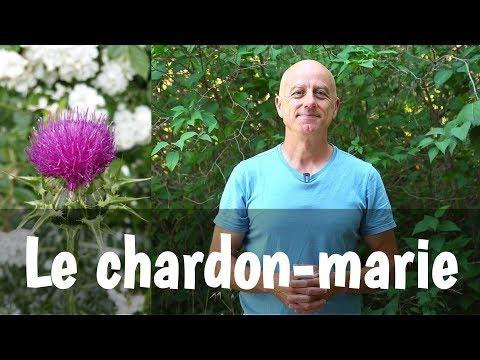 Chardon marie vertus