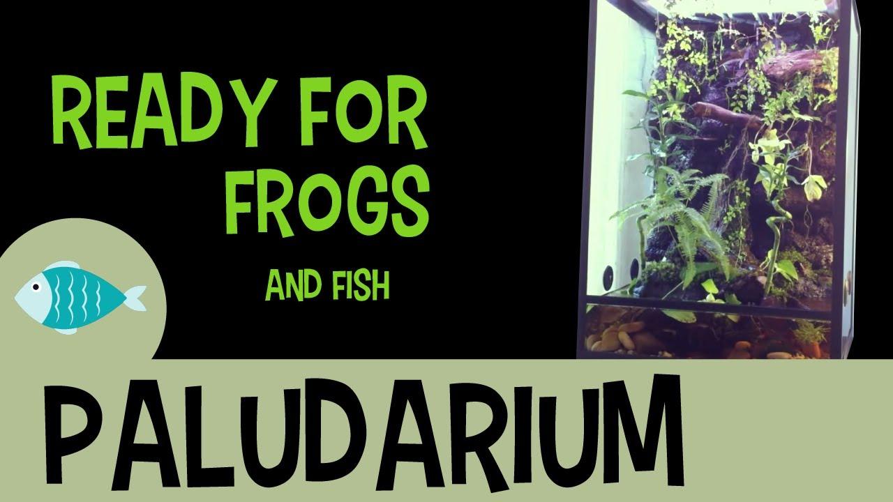 Green Tree Frog Terrarium Paludarium Setup Youtube