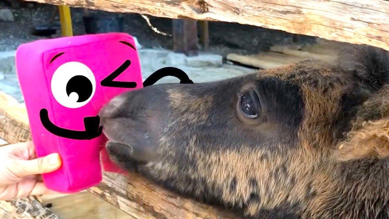 Куби и Маша в зоопарке, кормят кроликов и других животных