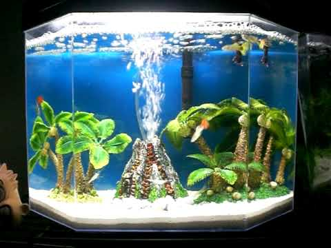 5 gallon guppy + ghost shrimp aquarium fish tank (volcano island