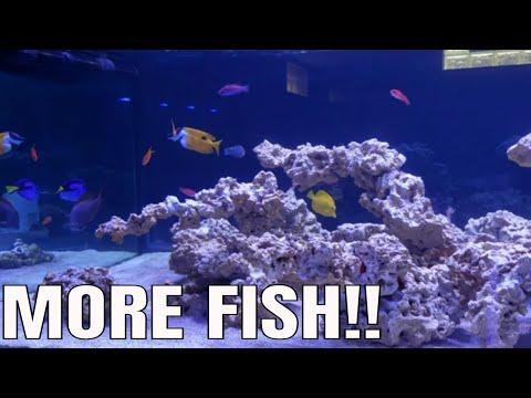 ADDING MORE FISH TO MARINE AQUARIUM