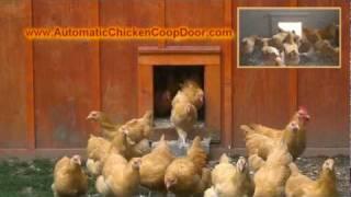 Automatic Chicken Coop Door - Morning Rush