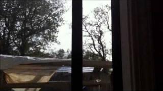 bees at my window.wmv Thumbnail