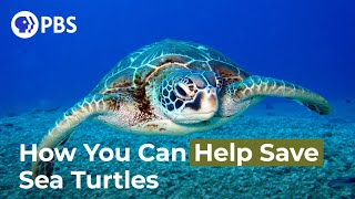 How You Can Help Save Sea Turtles
