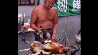 ПУСТЬ ГОВОРЯТ ► Любимую собаку съел сосед
