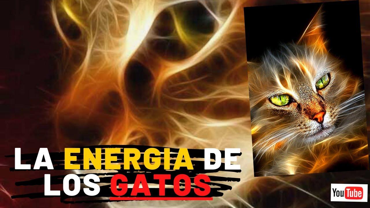 TOP 7... QUE ENERGÍAS TIENEN LOS GATOS? 🐈