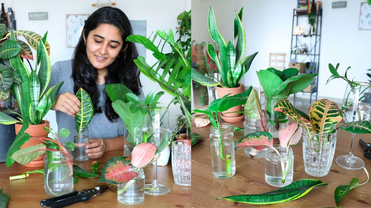 Propagating All My Indoor Plants From Cuttings In Water During The Lockdown Try With Me Youtube
