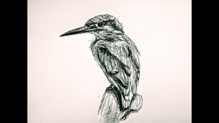 pen beginners simple drawing kingfisher relaxing therapy