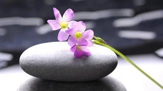 Zen Music: Meditation Music, 3 Hour, Relaxing Music, Calming Music, Soothing Music, Relaxation ☯2354