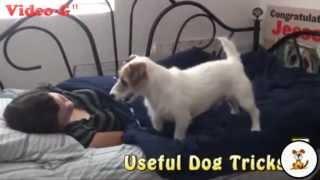 vi piacerebbe avere un cane che si occupa delle faccende domestiche?