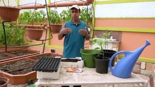 زراعة الفلفل