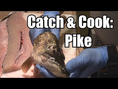 Catch, Clean, & Cook: NORTHERN PIKE (No Bones!)