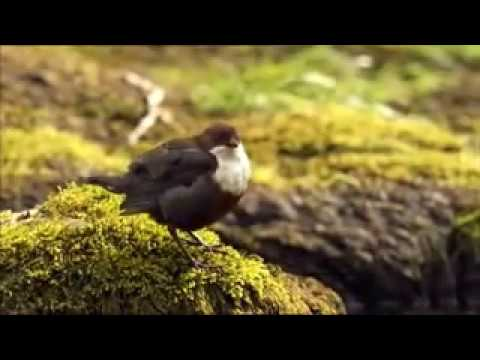 The Clyde Valley. South Lanarkshire. BBC Countryfile