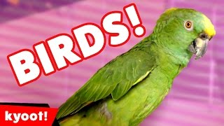 Funny Parrot & Birds Compilation October 2016 | Kyoot Animals