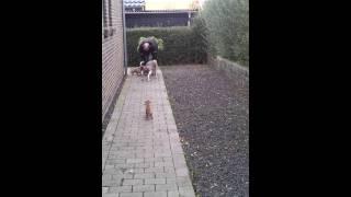Kennel Wild And Wicked - D Litter House Training  Www.wildandwicked.dk