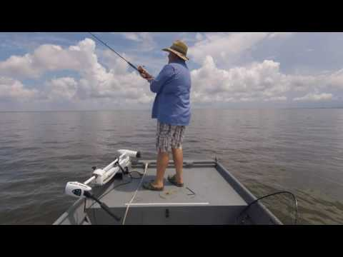 Barataria Bay fishing Speckled Trout under birds