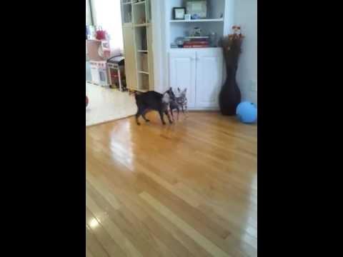 Dumb dog vs smart cat