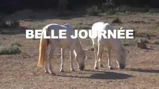 Mas du bosc - Equitation Camargue