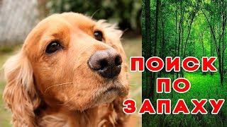 Как научить собаку искать предметы Команда Ищи