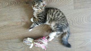 Мягкая ИГРУШКА для кота/котенка/кошки СВОИМИ РУКАМИ! Очень просто!