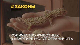 Количество животных в квартирах россиян могут ограничить. Что думают барнаульцы?